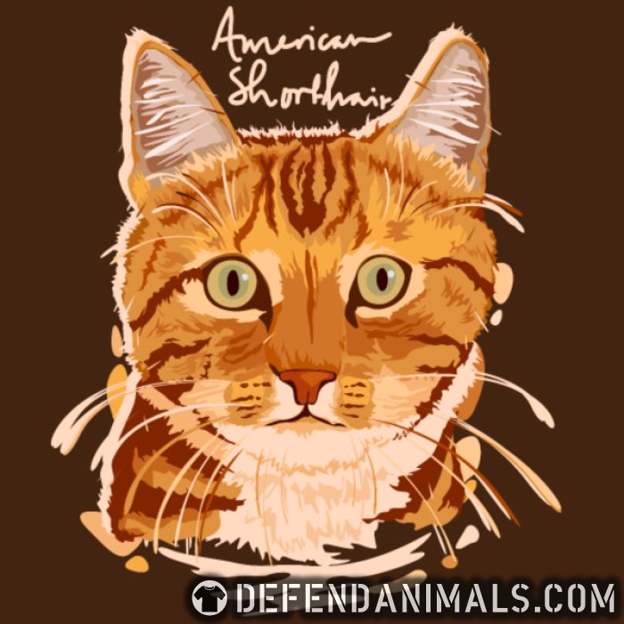 American shorthair  - Cats Lovers Women Organic T-shirt