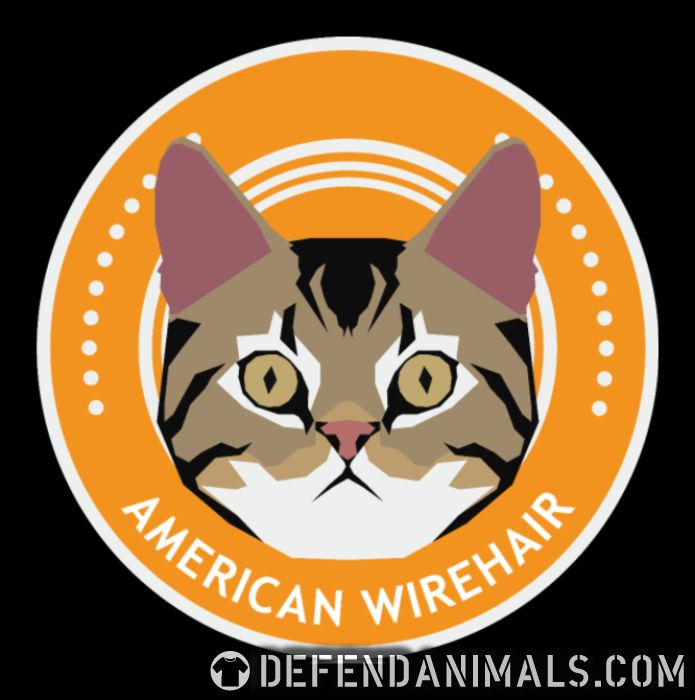 American Wirehair Cat - Cat Breeds Women Organic T-shirt