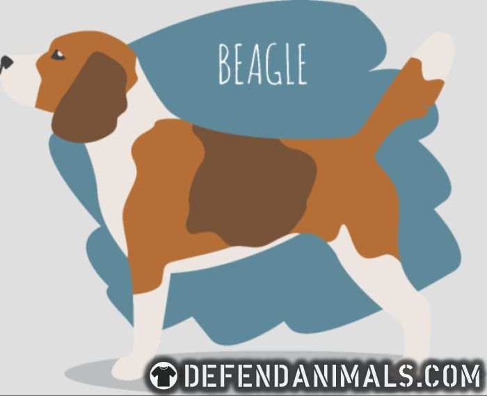 c15ac4ea Beagle · Dog Breed Local Shirt · Defend Animals