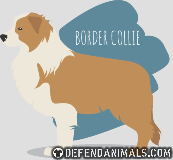 Border Collie - Dog Breeds Women Organic T-shirt