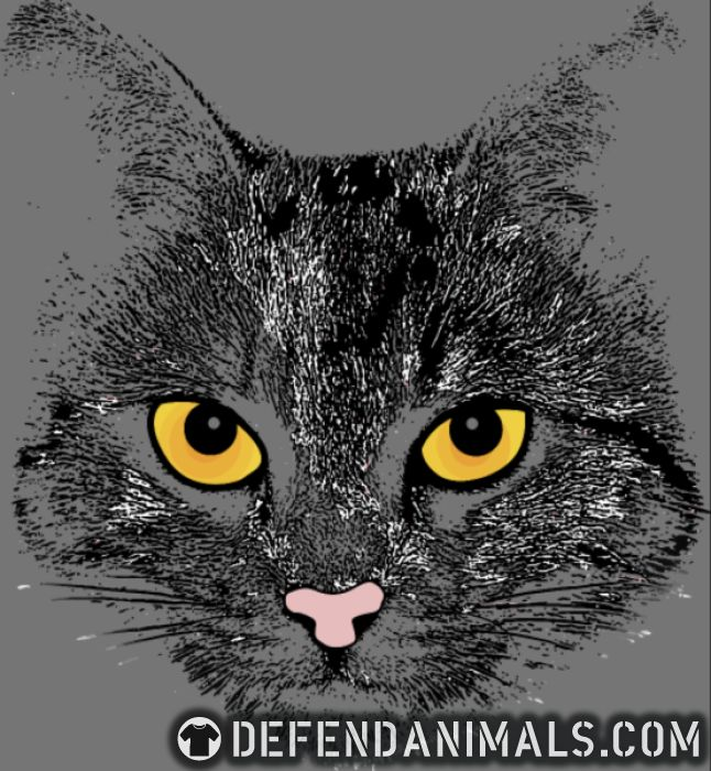 Cats Face  - Cats Lovers Women Organic T-shirt