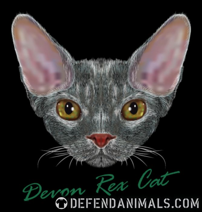 Devon Rex Cat - Cat Breeds Women Organic T-shirt