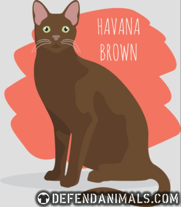 Havana Brown Cat - Cat Breeds Women Organic T-shirt