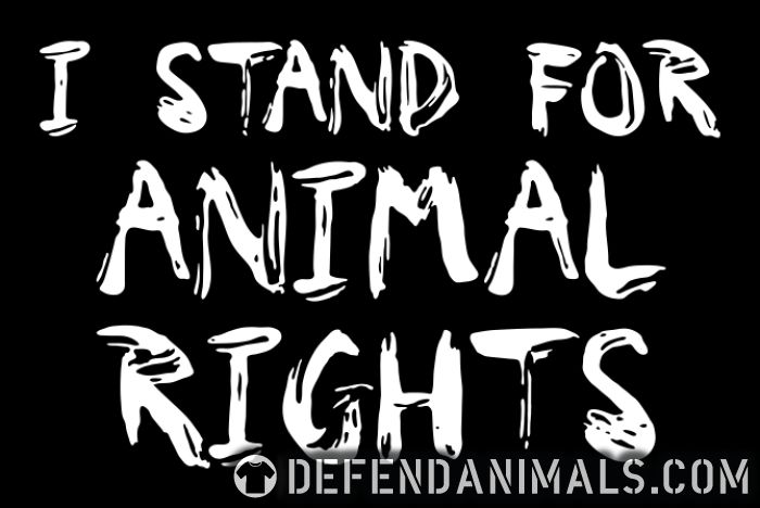 I stand for animal rights - Animal Rights Activism Women Organic T-shirt