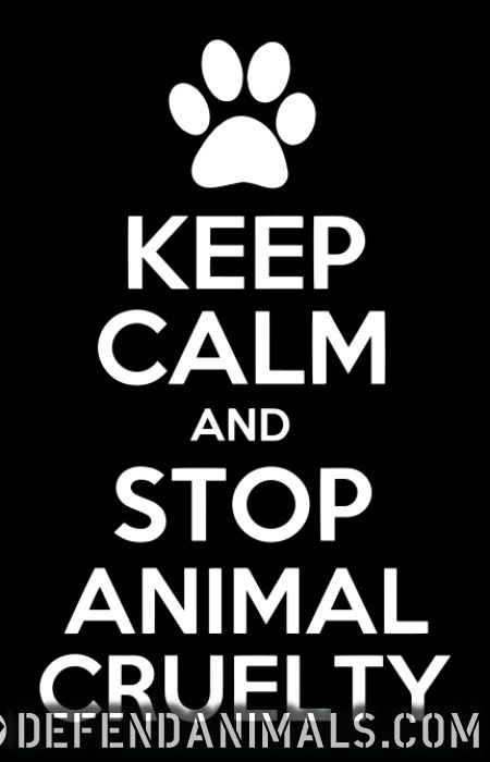 Keep calm and stop animal cruelty - Animal Rights Activism Women tank tops