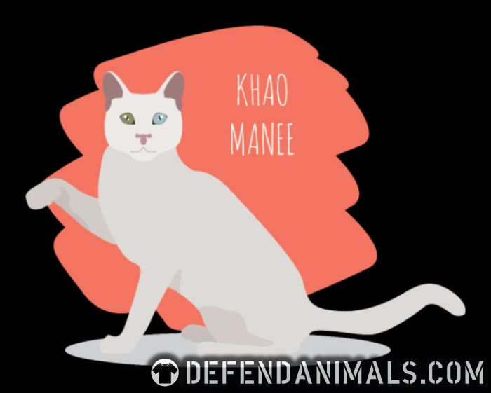 Khao Manee Cat - Cat Breeds Women Organic T-shirt