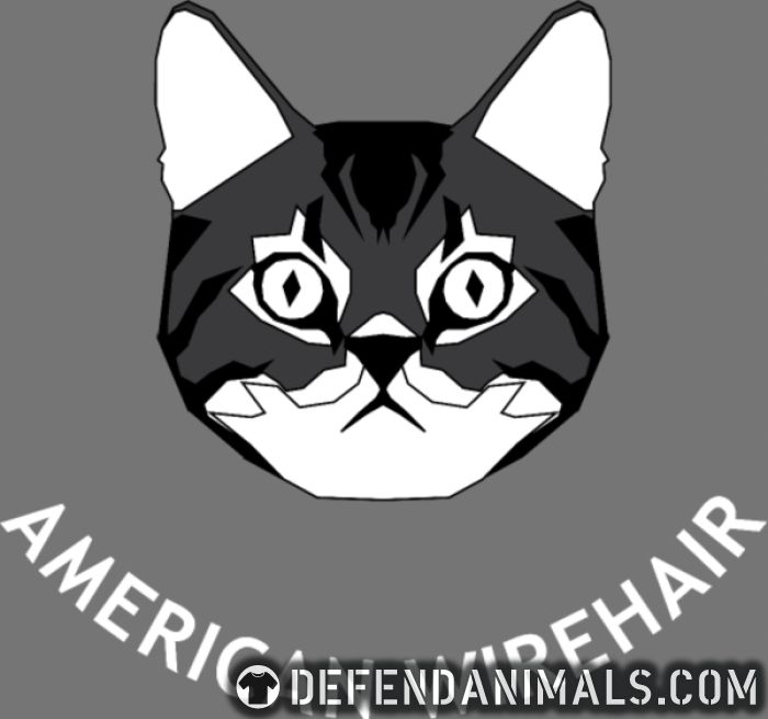 American Wirehair Cat - American Apparel t-shirt 🐾 DefendAnimals.com