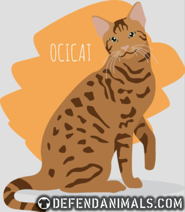 Ocicat  - Cat Breeds Women Organic T-shirt