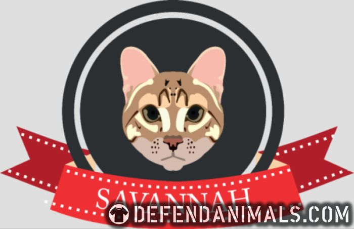 Savannah Cat - Cat Breeds Women Organic T-shirt