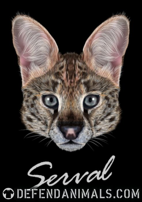 Serval Cat - Cat Breeds Women Organic T-shirt