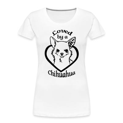 Loved by a chihuahua
